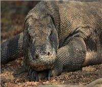 الصين تكتشف حيوان من زواحف ما قبل التاريخ