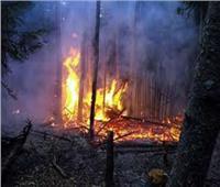 حريق يهدد غابة البامبو في جبل كينيا