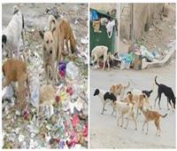 القتل والرفق وبينهما «الإخصاء».. كيف تواجه الدولة 15 مليون كلب ضال؟