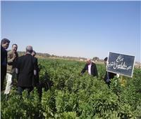 صور  وفد البحوث الزراعية يطمئن على الزراعات في الوادي الجديد