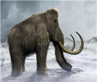 صور  عودة «الحيوانات الضخمة» مرة أخرى للحياة