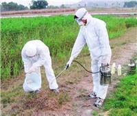 12 نصيحة من «الزراعة» للاستخدام الآمن للمبيدات.. تعرف عليها