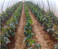 خبير زراعي يطالب بالإسراع في تنفيذ برنامج إنتاج تقاوي الخضر