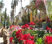 حديقة الأورمان في أبهى صورها لانطلاق معرض «زهور الربيع» الـ86