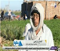 فيديو| صاحب مزرعة: الفلاح الذي يزرع البنجر «محظوظ»