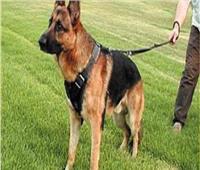 شجاعة كلب ينقذ عائلة من الموت حرقاً