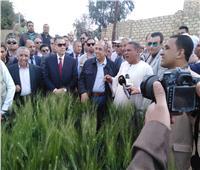 صور.. «أبوستيت» و«عبد الجابر» يتفقدان حقول القمح الإرشادية بمركز أهناسيا