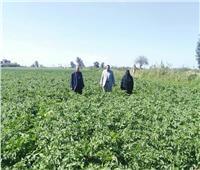 صور|«الزراعة» تنظم يوم حقل إرشادي وتشارك في إزالة التعديات بدمياط