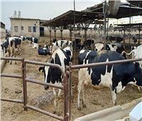 اليوم| «أبوستيت» يتفقد عددا من المشروعات الزراعية بأسيوط