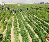 فيديو| الزراعة: حققنا طفرة في إنتاج المحاصيل الزراعية