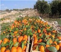 فيديو| الزراعة: مصر تتصدر قائمة المصدرين للموالح عالميا