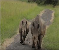 فيديو| الذكاء الاصطناعي لحماية الحيوانات المهددة بالانقراض