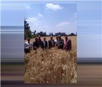 توريد 10.4 ألف طن من القمح لصوامع وشون الشرقية