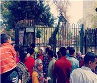 فيديو | آلاف المواطنين بحديقة الحيوان بالجيزة احتفالا بأعياد شم النسيم