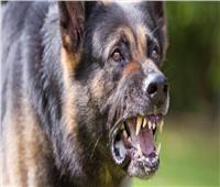 كلب يعقر مسن بسبب خلافات مع بلطجى بروض الفرج