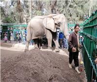 «حديقة الحيوان»: 120 ألف زائر استمتعوا بشم النسيم.. وهذه مواعيدنا في رمضان