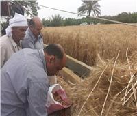 الغربية: زيادة انتاجية فدان القمح من 18 إلى 30 أردبا في هذه الحالة