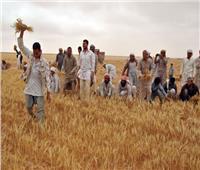 للعام الثاني..«أكساد» تنفذ مشروعا لزراعات القمح والشعير في مطروح