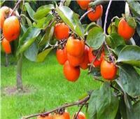 تعرف على توصيات الزراعة لـ«مزارعي حدائق الفاكهة المتساقطة» خلال مايو