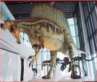 شاهد| أكبر قاعة عرض ديناصورات في العالم بالكويت