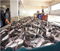الزراعة: مصر الأولى أفريقيا والثامنة عالميا في إنتاج الأسماك