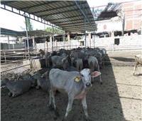 لمربي الماشية .. اتبع هذه النصائح مع الحيوانات خلال الموجة الحارة