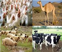 6 نصائح من الزراعة للمربين للحفاظ على الثروة الحيوانية من الموجة الحارة