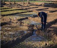 «الطرق البديلة» الحل الأمثل لمواجهة ندرة المياه والحفاظ على الرقعة الزراعية