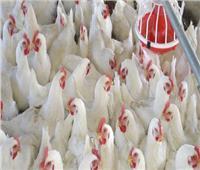 أسعار الدواجن بالأسواق بثالث أيام عيد الفطر