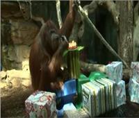 فيديو.. فرنسا تحتفل بعيد ميلاد أشهر إنسان غاب