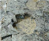 الصين:اكتشاف آثار أقدام لحفرية ديناصور تعود إلى 100 مليون عام