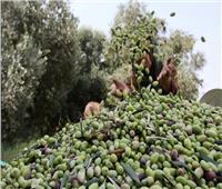 مصر وجورجيا تستعرضان آفاق التعاون الزراعي المشترك