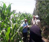 الزراعة: استمرار الحملات على حقول الذرة بدمياط