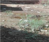 إزالة 12 حالة تعد على الأراضي الزراعية بالمنيا