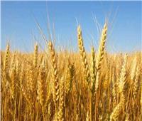 فيديو| التموين: لدينا مخزون آمن من القمح
