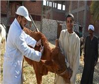 «الزراعة»: تحصين 121 ألف رأس ماشيةبالحملة القومية ضد الحمى القلاعية