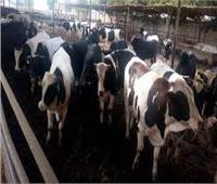 تحصين 1790 رأس ماشية بالوادي الجديد