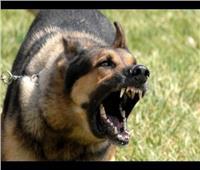 حكاية أبشع جريمة قتل ابن لوالدته وزوجها.. «الكلاب شاركت في العملية»