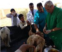 حملة لتحصين الأغنام والماشية بصحراء مرسى مطروح