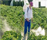 تفاصيل| لجنة مبيدات الآفات الزراعية تقدم كشف حساب