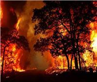 «الحر الشديد» يشعل الحرائق بغابات إسبانية