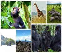 «لؤلؤة أفريقيا».. أجمل 10 مناطق سياحية في أوغندا