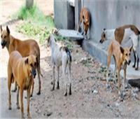 حملة لمكافحة الكلاب الضالة بالإسماعيلية