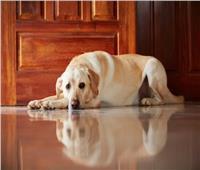 هل حديث «منع الكلاب للملائكة» من الإسرائيليات؟ «الأزهر للفتوى» يجيب
