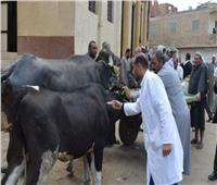 تحصين رؤوس الماشية ضد الحمى القلاعية بالغربية