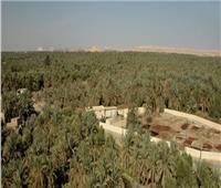 محافظ مطروح: الموافقة على حفر بئر لري 500 فدان بسيوة