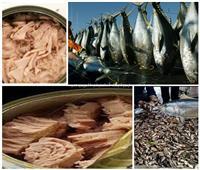 علب التونة بها «زئبق قاتل».. احذر سموم «اللحوم المظلمة»