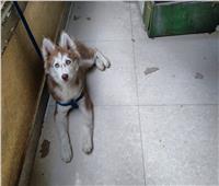 صور| إعلان غريب.. «كلبة ضايعة في حدائق القبة و2000 جنيه لمن يجدها»