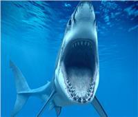كبد سمك القرش المتوحش يعالج مرضي الشلل الرعاش