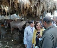 صور.. «الزراعة» تتابع حملات تحصين الماشية بالدقهلية